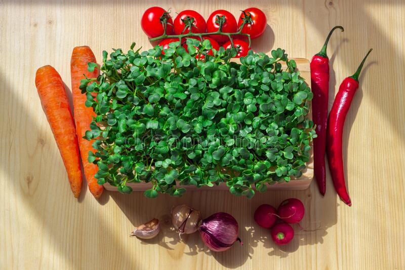 Daikon radish microgreen shoots, chili pepper, carrot, tomatoes, garlic, onion and radish royalty free stock images